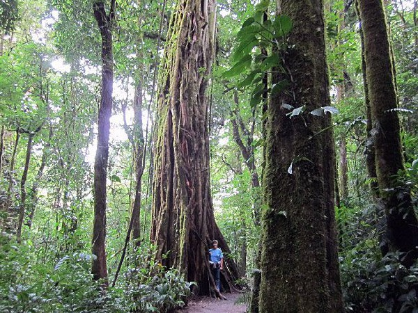 You will be close to the Monteverde Cloud Forest when you stay at the Rustic Mountain Lodge!