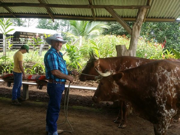 The farmer at the animal-powered sugar cane mill called the Trapiche.