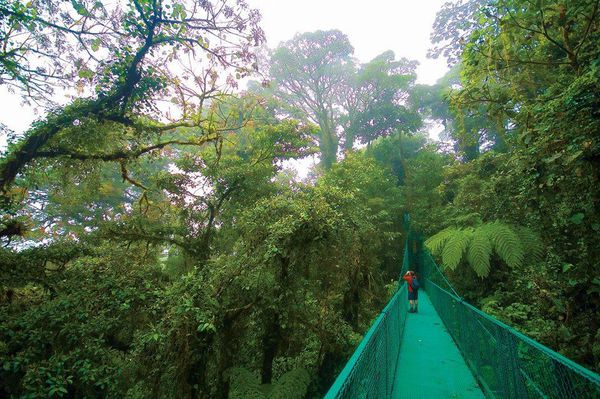 The hanging bridges in Arenal, Costa Rica.