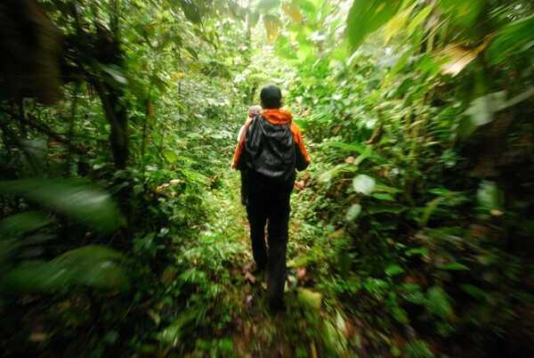 Hike in Carara National Park.