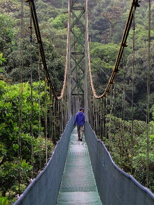 The hanging bridges tour is the most innovative way to hike through the cloud forest