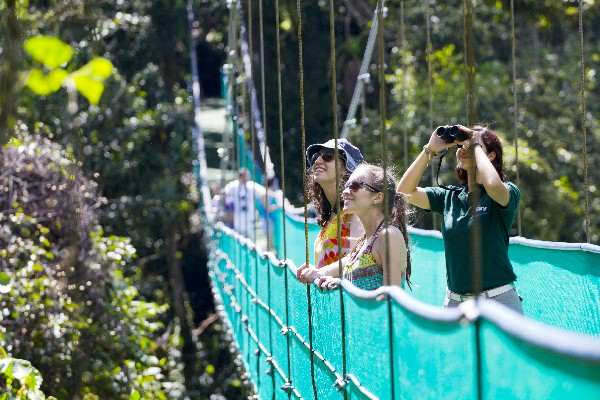 he hanging bridges tour is the most innovative way to hike through the rainforest