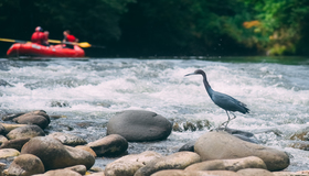 Sarapiqui River Float Costa Rica Wildlife & Nature