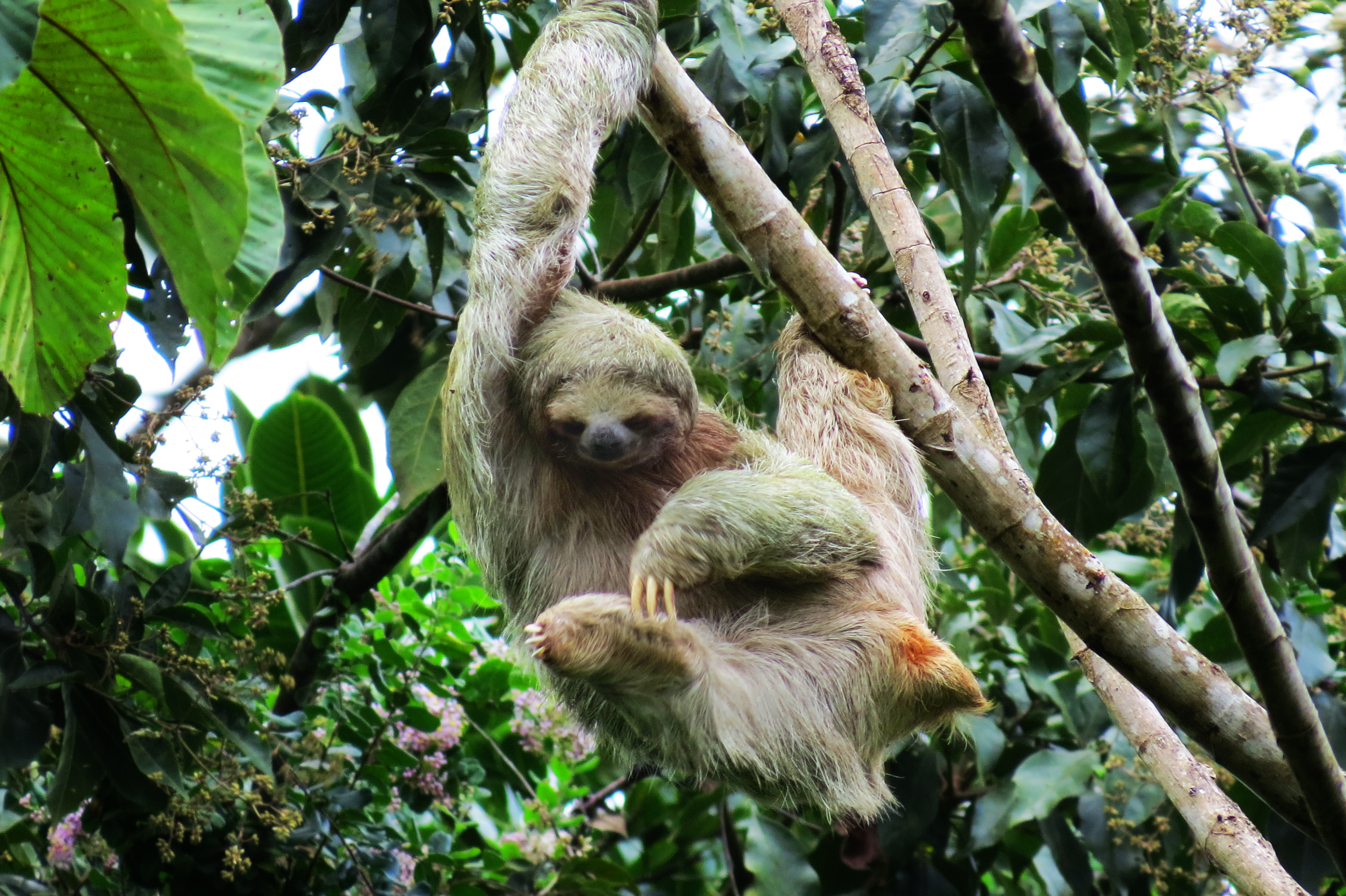 Where can I see sloths in La Fortuna?