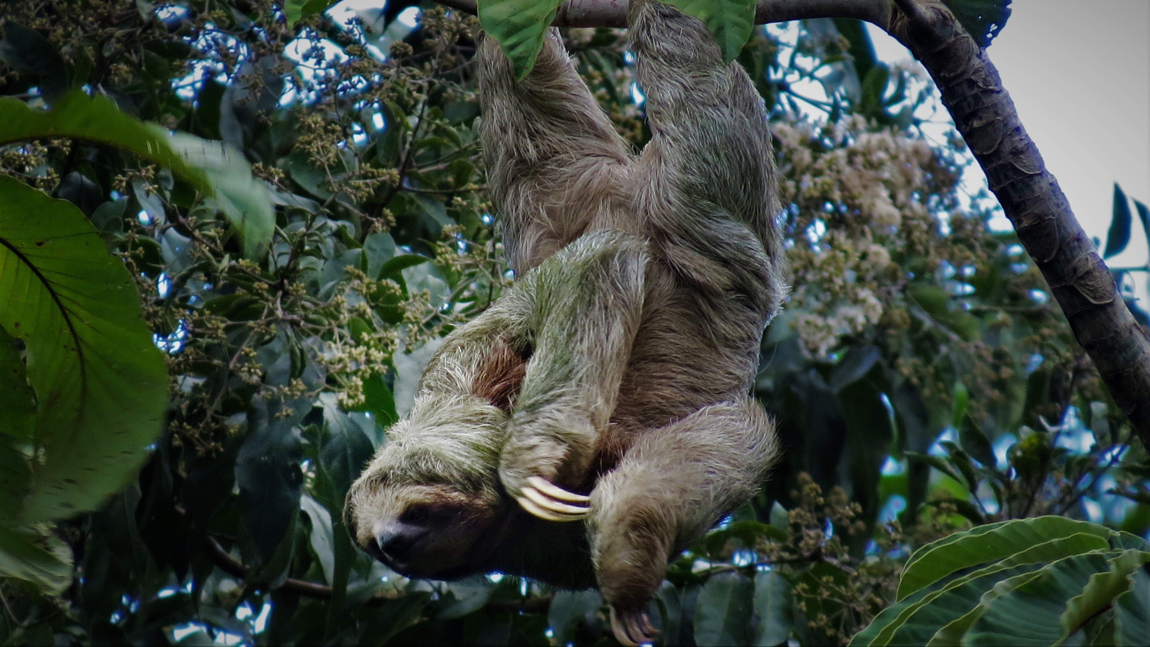 Can you recommend the best place to see sloths in La Fortuna?