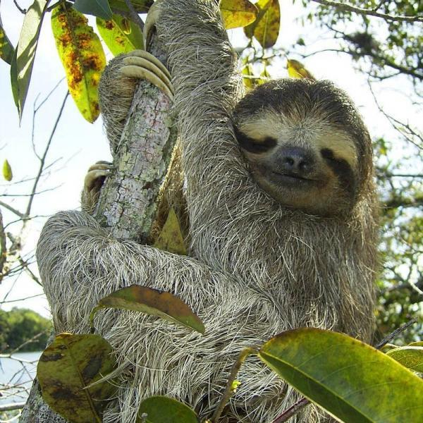 We offer the best place to see sloths in La Fortuna?