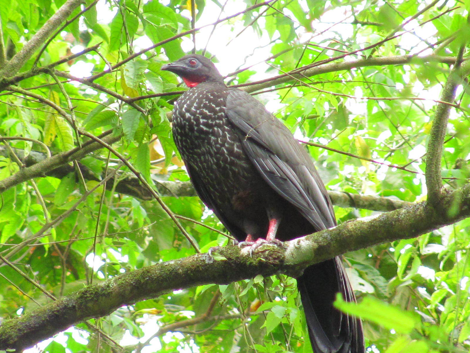 Lake Arenal one of the best places for bird watching.
