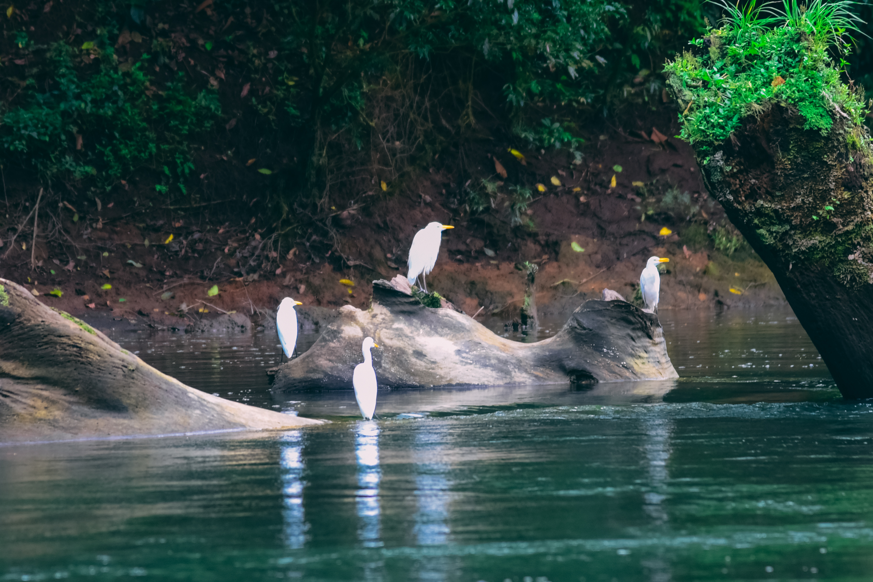 This Costa Rica Safari Float is a smooth, two-hour paddle down the quiet, lower section of the Sarapiqui River