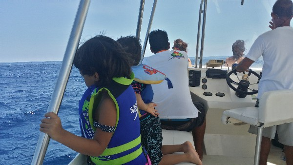 Dolphin Sightseeing in Costa Rica!