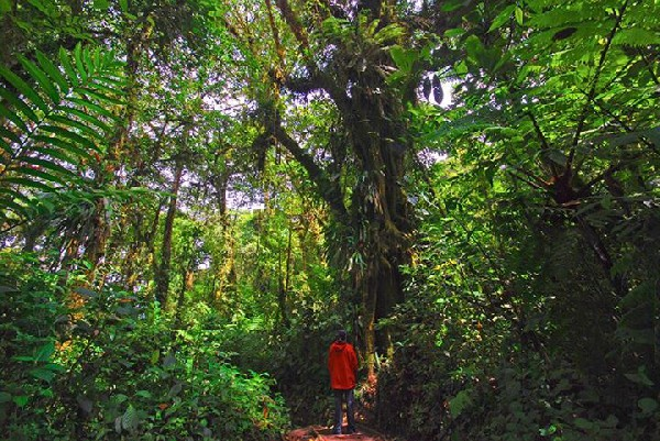 Explore the Cloud Forest in Costa Rica