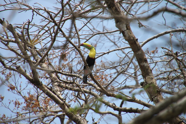 The best Playa Samara Day Tour for birdwatching doing a Safari Float trip on the Tenorio River in Costa Rica!