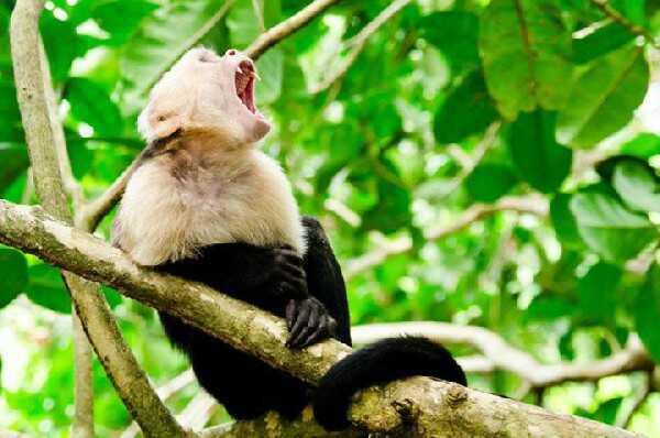 Costa Rica is full of wildlife!