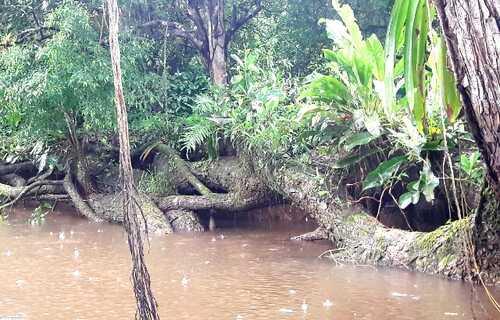 Species of birds and wildlife on Costa Rica's Caño Negro Wildlife tour
